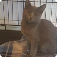 Adopt A Pet :: Kate - Griffin, GA
