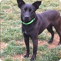 Adopt A Pet :: Fredo - Monroe, NC