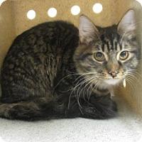 Adopt A Pet :: CRYSTAL - Reno, NV