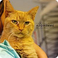 Adopt A Pet :: Rocky - Edwardsville, IL