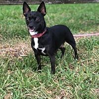 Adopt A Pet :: Rosie - Davie, FL