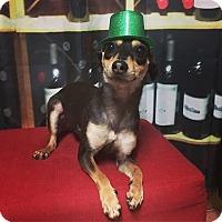 Adopt A Pet :: Mason - Davie, FL