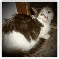 Adopt A Pet :: NAOMI - Medford, WI