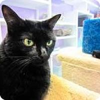 Adopt A Pet :: Kate - Marietta, GA