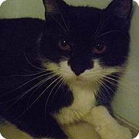 Adopt A Pet :: Letty - Hamburg, NY