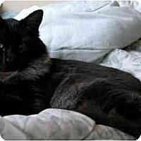 Adopt A Pet :: Oso - Davis, CA