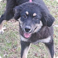 Adopt A Pet :: Miss Snuggle Bear - Brattleboro, VT
