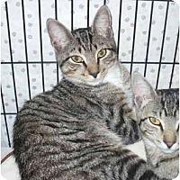 Adopt A Pet :: Gulliver - Colmar, PA
