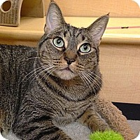 Adopt A Pet :: Ramsey - Foothill Ranch, CA
