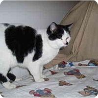 Adopt A Pet :: Lydeea - Hamburg, NY