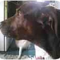 Adopt A Pet :: Elway - URGENT! - Alliance, OH