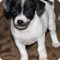 Adopt A Pet :: Moosha - La Habra Heights, CA