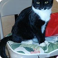Adopt A Pet :: Triton - Colmar, PA