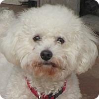 Adopt A Pet :: Monte - La Costa, CA