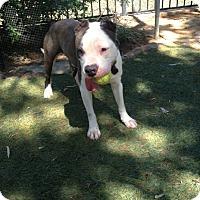 Adopt A Pet :: Peace - San Diego, CA