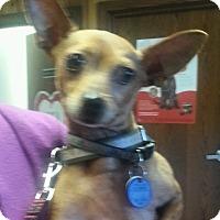 Adopt A Pet :: Cooper - Columbus, OH