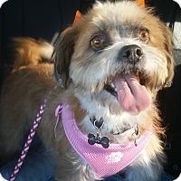 Adopt A Pet :: Penny - Buena Park, CA