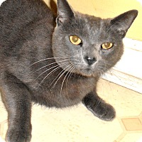 Adopt A Pet :: Silvie - Chattanooga, TN