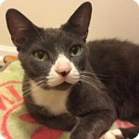 Adopt A Pet :: Juniper - McHenry, IL