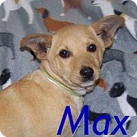 Adopt A Pet :: Max - Oviedo, FL