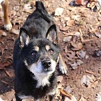 Adopt A Pet :: Riku - Manassas, VA