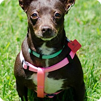 Adopt A Pet :: Coco - Arlington, TN