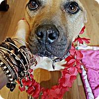 Adopt A Pet :: Genevieve - Rockville, MD