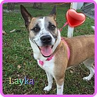 Beagle Mix Dog for adoption in Hollywood, Florida - Layka