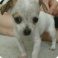 Adopt A Pet :: Bali - Meridian, ID