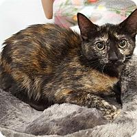 Adopt A Pet :: Mame - Pasadena, CA