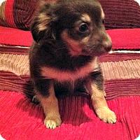 Adopt A Pet :: Viviana - Phoenix, AZ