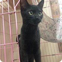 Adopt A Pet :: Bryson - Cashiers, NC