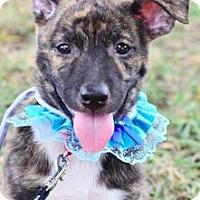 Adopt A Pet :: Atta - San Ramon, CA
