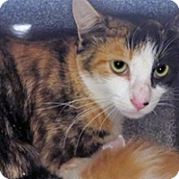 Adopt A Pet :: 317668 - Wildomar, CA