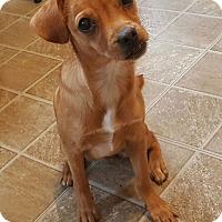 Adopt A Pet :: Jaz - New Oxford, PA