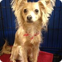 Adopt A Pet :: Marti - Bedford, TX