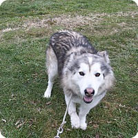 Adopt A Pet :: Savannah - Augusta County, VA