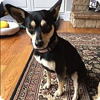 Adopt A Pet :: Mimi - Monroe, NC