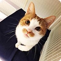 Adopt A Pet :: Knolan - Grayslake, IL