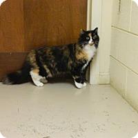Adopt A Pet :: Melonie - Randleman, NC