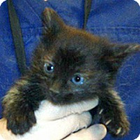 Adopt A Pet :: 330663 - Wildomar, CA