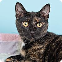 Adopt A Pet :: Phe - Wilmington, DE