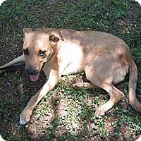 Adopt A Pet :: MacTavish - Locust Fork, AL