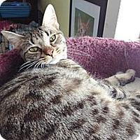 Adopt A Pet :: Libby - Byron Center, MI