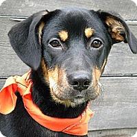 Adopt A Pet :: Lexi - Monteregie, QC