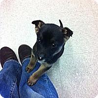 Adopt A Pet :: Darian - Saskatoon, SK