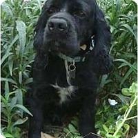 Adopt A Pet :: Alvin - Sugarland, TX