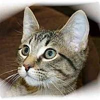 Adopt A Pet :: Logan - Montgomery, IL