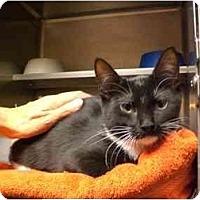 Adopt A Pet :: Oakley - Lombard, IL