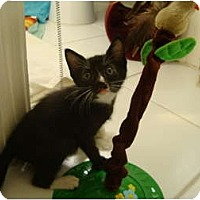 Adopt A Pet :: Mandy - Coral Springs, FL